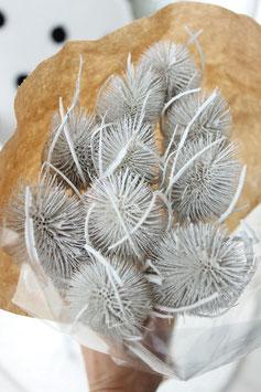 Trockenblume Kardendistel weiß
