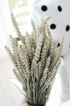 Trockenblume Hafer natur