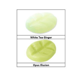 Opus Illusion & White Tea Ginger
