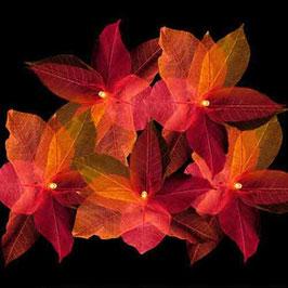 Blätterkette (rot)