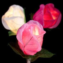 Rosen (pink)