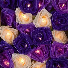 Kohlrosen (Lavendel)