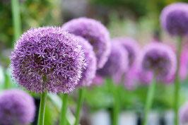 Blumenstrauß Ton in Ton / Mini
