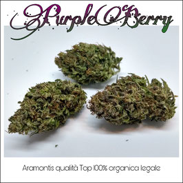 PurpleBerry