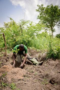 Baumpflanzpaket - YES, WE PLANT! - Togo, Westafrika