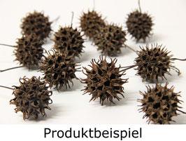 10 Stück Amberbaum Zapfen