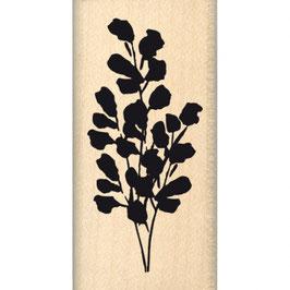 Tampon bois Plante floue_Bois FD