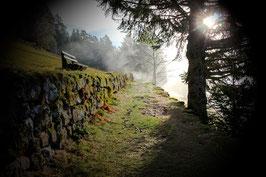 Der Weg zum Sonnenlicht