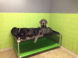 Lit  Superposé pour chien de taille EX-Large 1500 mm x 800 mm  H 540 mm ( hauteur modifiable)