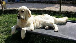 Lit pour chien de taille Small  microperforé 970 mm x 680 mm  H 200 mm