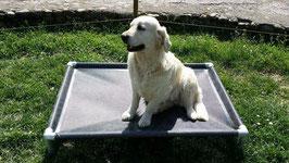Lit pour chien de taille EX-Medium Microperforé 1250 mm x 850 mm  H 200 mm