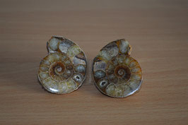 Ammoniten-Paar - 2