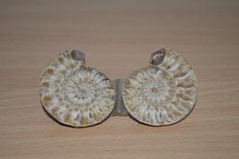 Ammoniten-Paar - 7