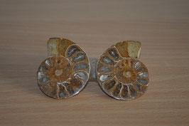 Ammoniten-Paar - 1