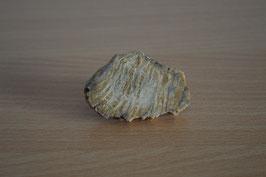 versteinertes Holz (Scheibe) - 1