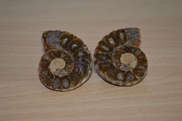 Ammoniten-Paar - 5
