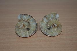 Ammoniten-Paar - 6