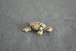 Dalmatinerjaspis-Wasserschildkröte