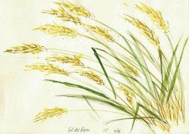 Grußkarte Gräser