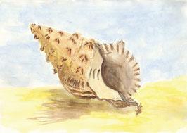 Grußkarte Muschel