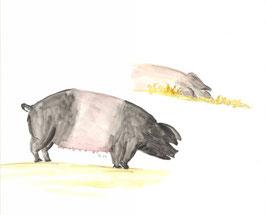 Grußkarte Hällisches Landschwein