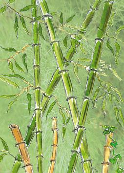 Grußkarte Bambuswald