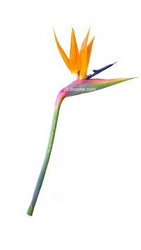 Plante Artificielle, Oiseaux de Paradis, décoration maison, décoration bureau, décoration intérieure