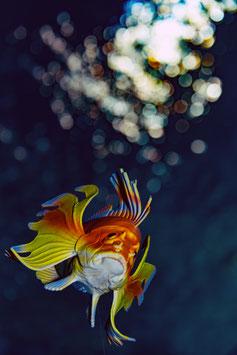 VIP Unterwasser-Fotokurs