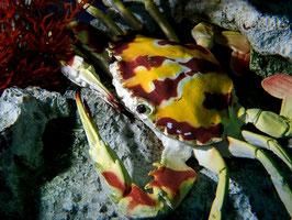 Unterwasser-Fotokurs Grundkurs,  Gruppenkurs (mind.3 Personen, Preis pro Person)