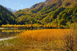 «Herbstglut», am Lac de Derborence,  Conthey, Wallis, CH