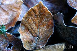 «Morgenfrost» II, Horw, Luzern, CH