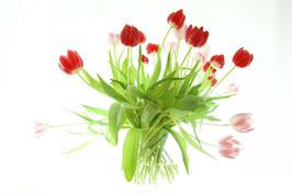 Frühlingserwachen, Tulpen im Glas, Horw, Luzern, Schweiz