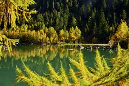«Einblicke», Fichtenwald im Herbstgewand, am Lac de Derborence,  Conthey, Wallis, CH
