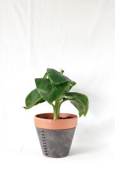 Flowerpot grey/black