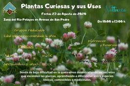 Plantas curiosas y sus usos