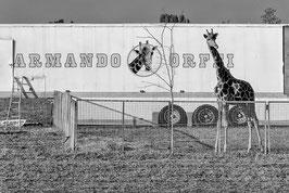 GM - Circo Armando Orfei Vittuone