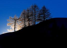 LC 16 - Wonderful trees