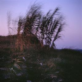 PT - Dune con canne, Salento