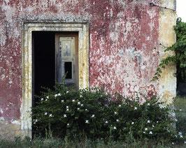 PT - Casa con pianta cappero, Salento
