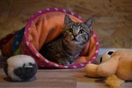 Glücks-Paket - large - Katze