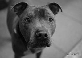 Glücks-Paket - large - Hund