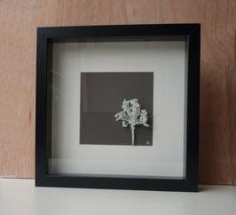Cadre vitrine avec une fleur d'ail en céramique