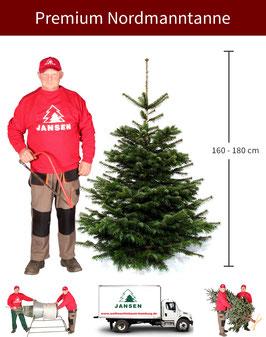 Nordmanntanne Premium   160 - 180 cm