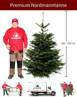 Nordmanntanne Premium   180 - 200 cm