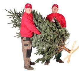 Weihnachtsbaumholzkreuz - Weihnachtsbaumständer aus Holz -  Höhe bis zu 2,5 m