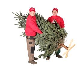 Weihnachtsbaum aufstellen / Tannenbaum aufstellen