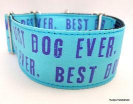 Halsband Best Dog Ever türkis / 61.
