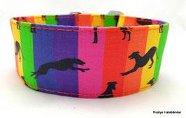 Halsband Windhund / 26. Regenbogen Windis