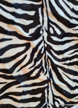 Halsband Wildlife Zebra / 130.