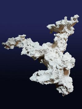 Korallen-Zweig